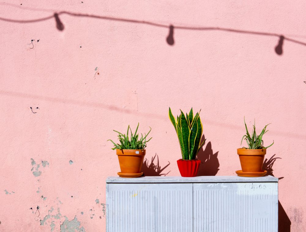 Further reinforcing this one of tips and tricks for Airbnb hosts, we have pictured here a pink painted outdoor wall with three potted green plants on top of blue cabinet.